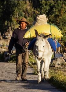 Going to Market by Cynthia Sadler