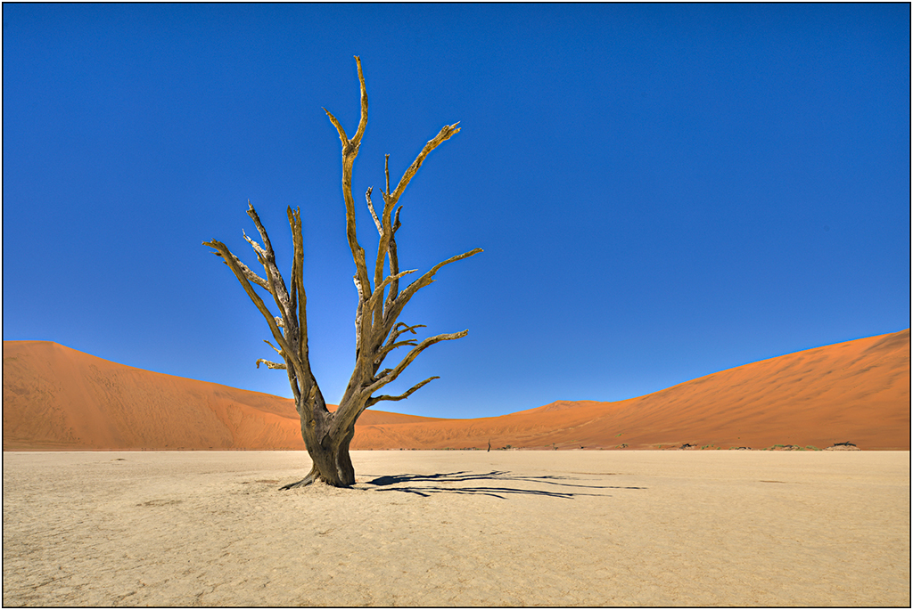 Deadvlei, The Namib Desert by Robert Devenish - 14 points - Award