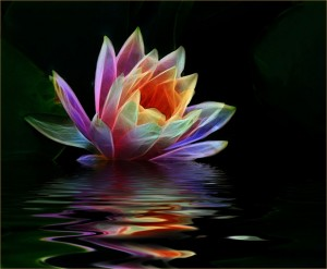 Reflective Water Lily