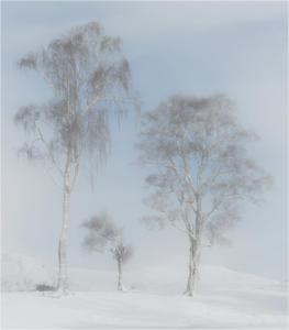 Winter trees by John Sixsmith